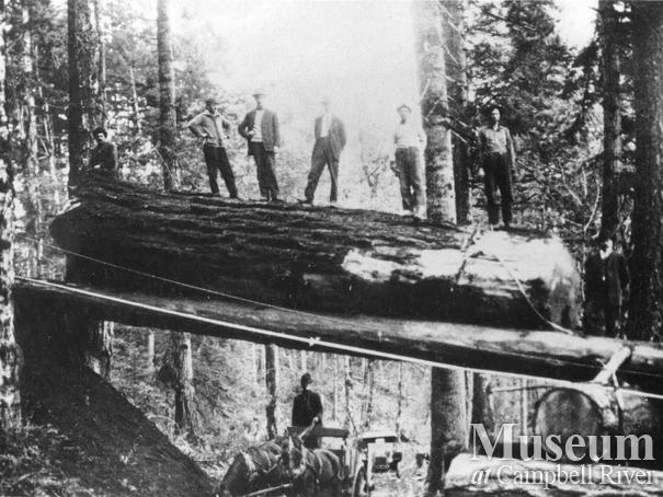 Log chute over the Island Highway