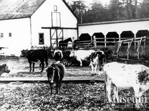 Thulin barn and livestock, Campbell River