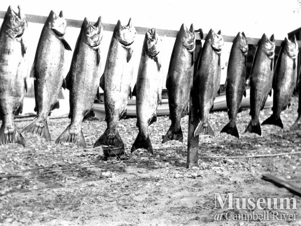 Catch of salmon on Tyee Spit
