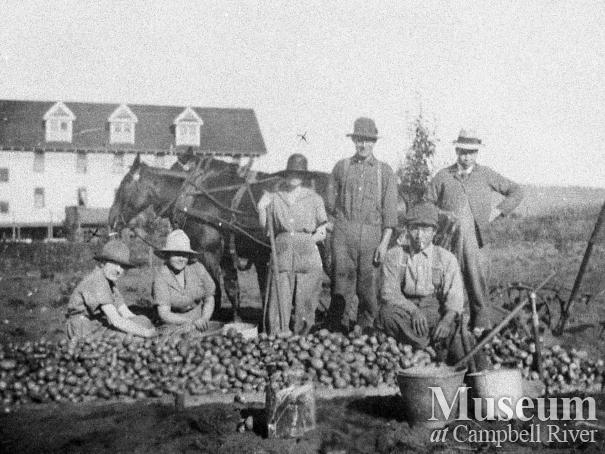 Thulin family potato fields behind the Willows Hotel